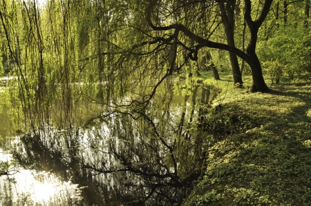 Willow falling and reflecting in a lake. photo