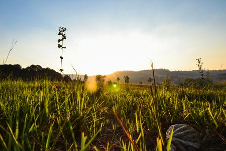 Morning sun meadow