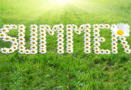 Word Summer made of daisy flowers