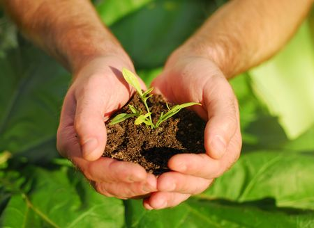 replant: Hand holdning plant