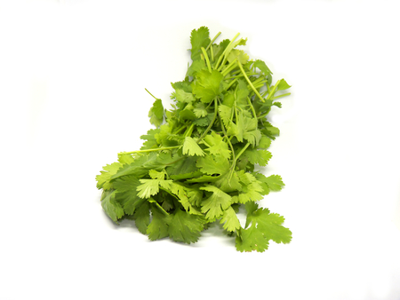 Fresh cilantro isolated on a white background. Bunch of cilantro 免版税图像