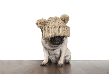 floor covering: Fed up cute pug dog puppy with knitted hat That covers eyes