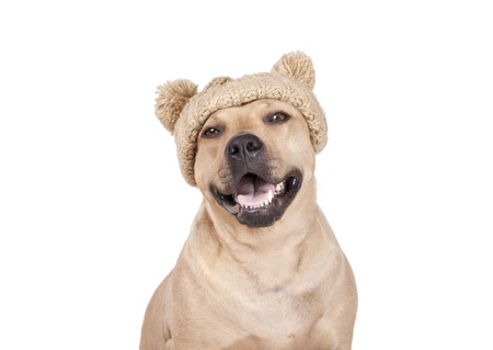 Happy laughing dog with knitted hat