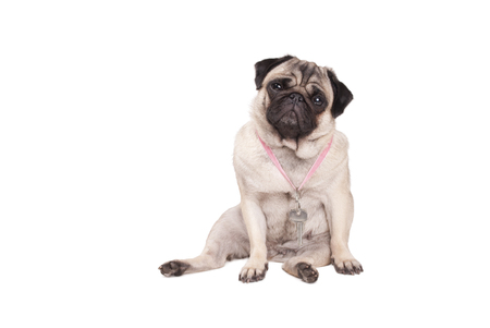 Latchkey child, sad looking pug dog puppy with tears in eyes sits with keys on lanyard