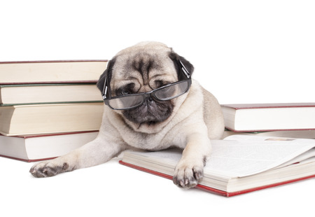erudite cute looking puppy lying down between books, wearing reading glasses, isolated on white background