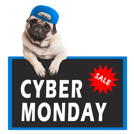 cute pug puppy dog hanging with paws on sign with text cyber monday, on white background