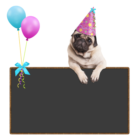 adorable pug puppy dog hanging with paws on blank sign with balloons and wearing pink party hat, on white background