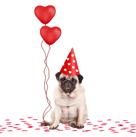 lovely cute pug puppy dog sitting down on confetti, wearing party hat and holding red heart shaped balloons, isolated on white background