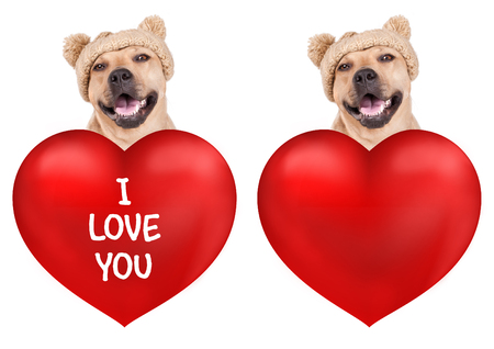 lovely cute dog with big valentines day heart, isolated on white background