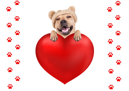 lovely cute dog with knitted hat hanging with paws on big valentines day heart, isolated on white background