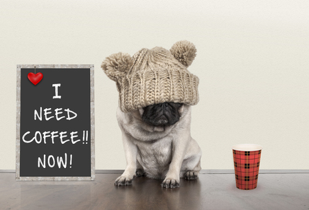 cute pug puppy dog with bad morning mood, sitting next to blackboard sign with text I need coffee now, copy space