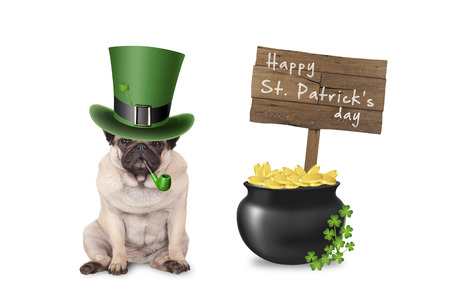 milion: cute pug puppy dog with st. patricks day hat and pipe sitting next to pot with gold, wooden sign and shamrock