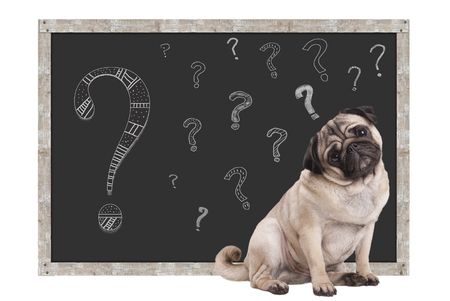sweet smart pug puppy dog sitting in front of  blackboard with chalk question marks, isolated on white background Imagens - 74535703