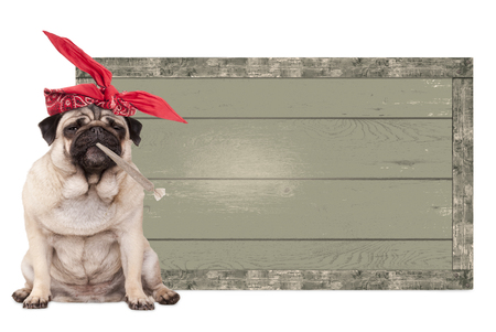 spliff: cute pug puppy dog being high on smoking marijuana weed joint, next to blank vintage wooden sign isolated on white background