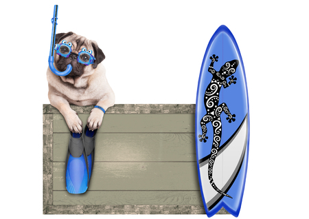 funny pug dog with blue vintage wooden beach sign, with goggles, snorkel, surfboard and flippers for summer, isolated on white background Stock Photo