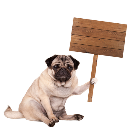 lovely cute pug puppy dog sitting down with blank wooden sign on pole, isolated on white background