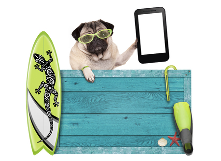 pug dog on vacation with blue vintage wooden beach sign, surfboard and mobile phone  tablet, isolated on white background