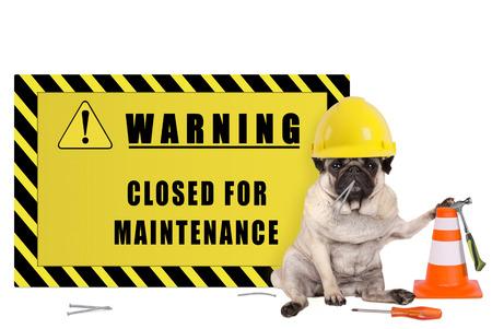 Pug hond met gele aannemer veiligheidshelm en waarschuwing met tekst gesloten voor onderhoud, geïsoleerd op een witte achtergrond Stockfoto - 79029763