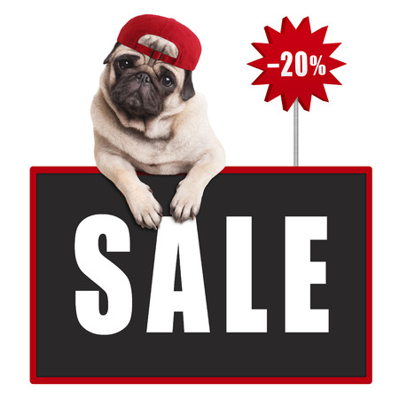 cute pug puppy dog wearing red cap, hanging with paws on blackboard sign with text sale and 20 percent off, isolated on white background Stock Photo
