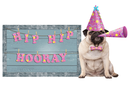cute pug puppy dog with pink party hat and horn and old  blue wooden sign with festive hip hip hooray banner, isolated on white background