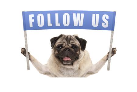 パグ子犬犬テキストと青い旗を保持している社会的なメディア、白い背景で隔離の私たちに従ってください。