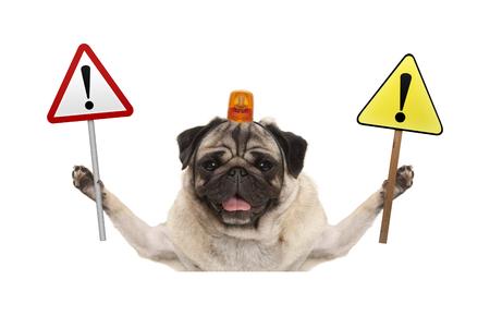 perro pug sonriente sosteniendo señal de stop y signo de exclamación amarillo, con luz intermitente naranja en la cabeza, aislado sobre fondo blanco