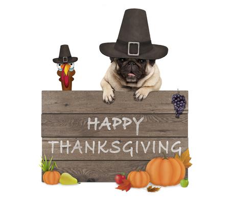 pavo divertido y perro pug llevando sombrero de peregrino para el día de acción de gracias y cartel de madera con texto feliz acción de gracias, aislado sobre fondo blanco