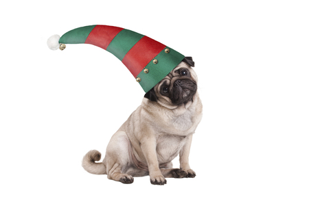 cute Christmas pug puppy dog, sitting down wearing red and green elf hat, isolated on white background