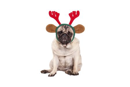 schattige pug puppy hond met rendieren gewei diadeem voor Kerstmis, zitten, op zoek chagrijnig, geïsoleerd op een witte achtergrond