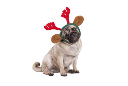 grappige kerst pug puppy hond zitten, gekleed rendier geweien diadeem, geïsoleerd op een witte achtergrond Stockfoto