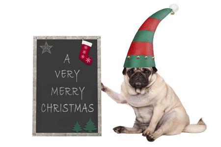 De hondzitting van de Kerstmispug puppy, die blackboardl, die elfhoed dragen op witte achtergrond wordt geïsoleerd