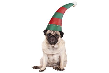 knorrige onder ogen gezien pug puppyhond met elfhoed voor Kerstmis, neer zittend, geïsoleerd op witte achtergrond