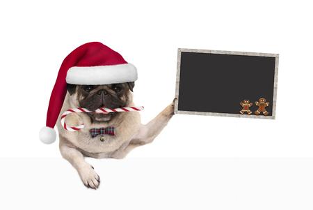 leuke pug van Kerstmis hond met santahoed en suikergoedriet, die blankboard teken in poot houden, die op witte achtergrond wordt geïsoleerd