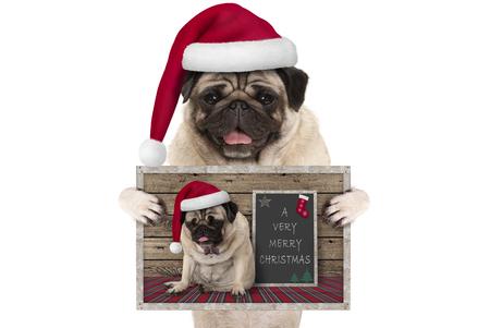 schattige lachende Kerstmis pug hond met kerstmuts, houden van wenskaart met zelfportret, geïsoleerd op een witte achtergrond Stockfoto