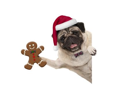 Glimlachende Kerstmispug hond die de peperkoekmens steunen en de hoed van de Kerstman, met poot op witte geïsoleerde banner dragen ,.