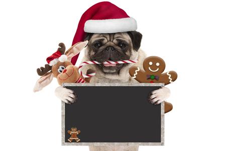 leuke pug van Kerstmis hond met santahoed en suikergoedriet, speelgoed en koekjes, die leeg bordteken steunen, dat op witte achtergrond wordt geïsoleerd