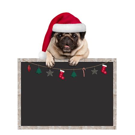 schattige pug puppy hondje dragen KERSTMUTS opknoping met poten op lege schoolbord teken met Kerstdecoratie, geïsoleerd op een witte achtergrond