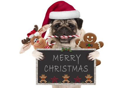 cute Christmas pug dog with santa hat and candy cane, toys and cookies, holding up blackboard, isolated on white background