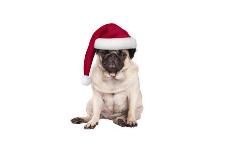 schattige pug puppy hondje met kerstmuts voor Kerstmis, zitten, op zoek knorrig, geïsoleerd op een witte achtergrond Stockfoto