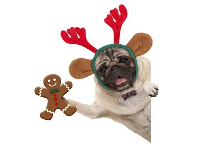 Glimlachende Kerstmispug hond die de peperkoekmens steunen en de hoofdband van rendiergeweitakken, met poot op witte geïsoleerde banner dragen ,.