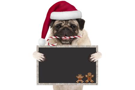 leuke pug van Kerstmis hond met santahoed en suikergoedriet, die leeg bordteken steunen, dat op witte achtergrond wordt geïsoleerd Stockfoto