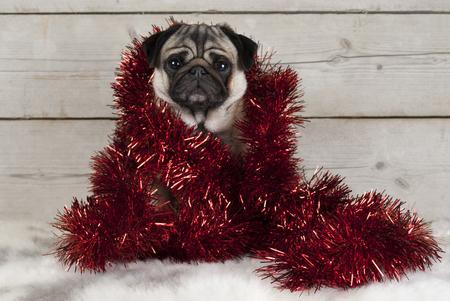 Leuke het puppyhond van Kerstmispug, die verpakt in rood klatergoud op schapehuid, met uitstekende houten achtergrond gaan zitten Stockfoto