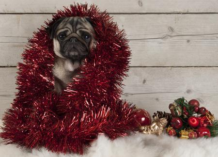 schattige kerst pug puppy hondje versierd met klatergoud, zittend op schapenvacht met ornamenten en houten achtergrond Stockfoto