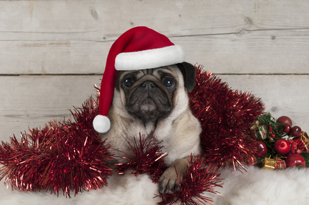cute Christmas pug puppy dog, lying down in red tinsel wearing santa claus hat, on sheepskin with ornaments and vintage wooden background Stockfoto