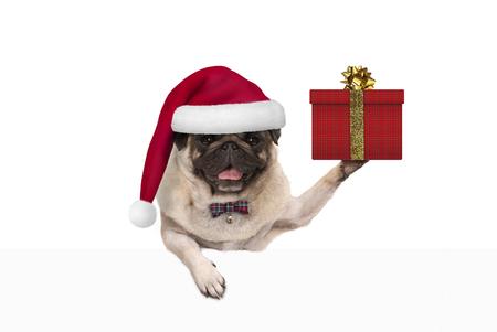 leuke Kerstmis pug hond met kerstman hoed, bedrijf aanwezig in de doos van de gift, opknoping op witte banner, geïsoleerd