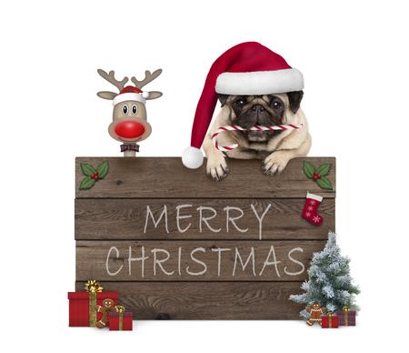 leuke kerst pug puppy hond en rednosed rendieren achter oude houten plank, versierd met presenteert en cookies, geïsoleerd op een witte achtergrond Stockfoto