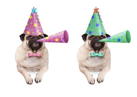 schattige pug puppy hondje opknoping met poten op lege banner, dragen kleurrijke verjaardag feestmuts en blazende hoorn, geïsoleerd op een witte achtergrond