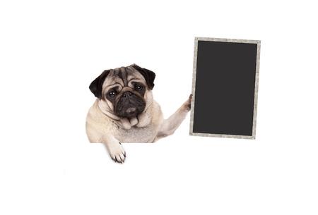pug puppy hondje bedrijf leeg bord teken, opknoping op witte banner, geïsoleerd Stockfoto