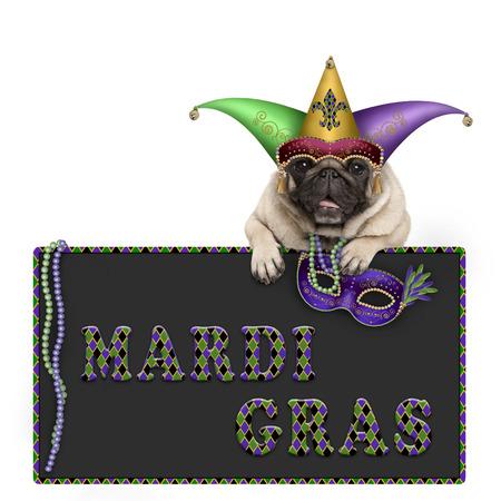 Mardi-graspug hond met Carnaval-hoed, parels en het Venetiaanse masker hangen op bordteken met tekst, op witte achtergrond wordt geïsoleerd die