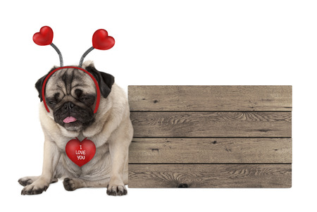 being fed up Valentines day pug dog with hearts diadem sitting down next to wooden sign, isolated on white background